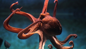 Read 2019: The Year of the Chief Executive Octopus (aka The Busy Parent)